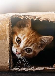 True Instinct Cat