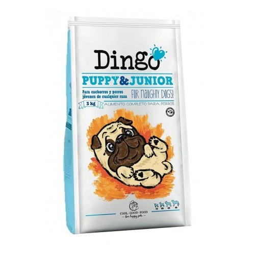 Dingo Puppy & Junior